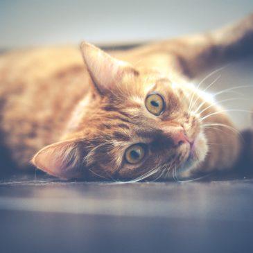 Wat heb je nu eigenlijk in huis gehaald, nu je een kat hebt?