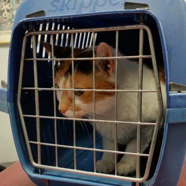 De perfecte reismand, stap 1 om je kat in het reismandje te krijgen!