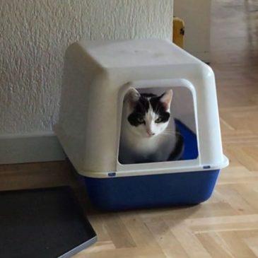 Gesloten kattenbak vs Dixie wc.