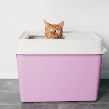 Moderne kattenbak onzin
