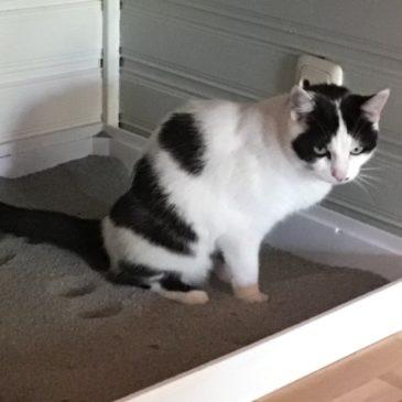 Plast jouw kat naast de kattenbak?