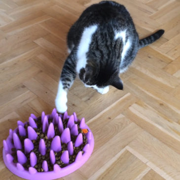 6 Redenen waarom je kat de voerpuzzel niet gebruikt