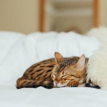 Oorzaken van stress bij de kat.