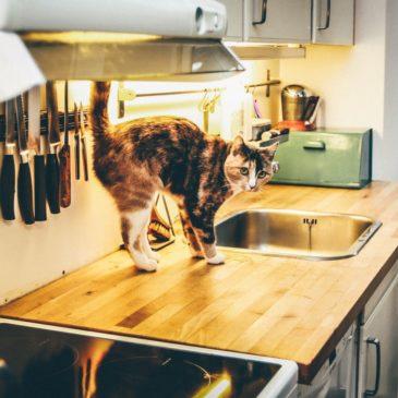 Waarom sproeit een kat in huis?