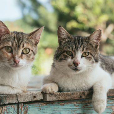 Hoe weet ik of mijn kat een andere kat zal accepteren?
