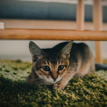 Hoe help ik mijn bange kat?