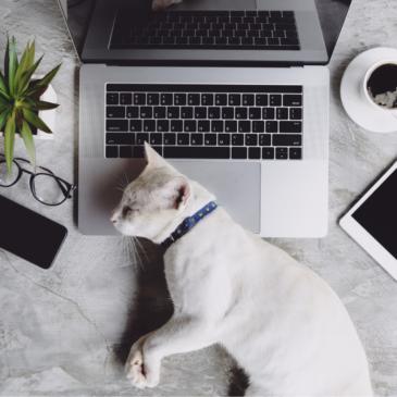 Waarom je kat voor de TV of je beeldscherm zit