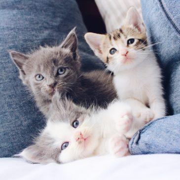 Hoe geef ik mijn kitten een goede start?
