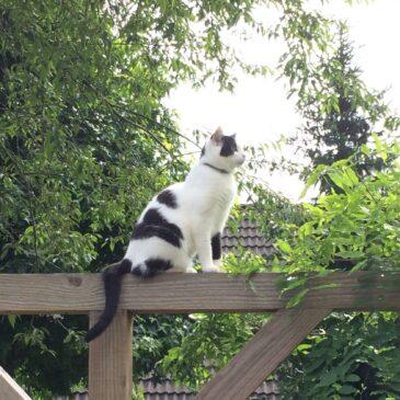 Kitten/kat voor het eerst naar buiten, waar moet ik op letten?